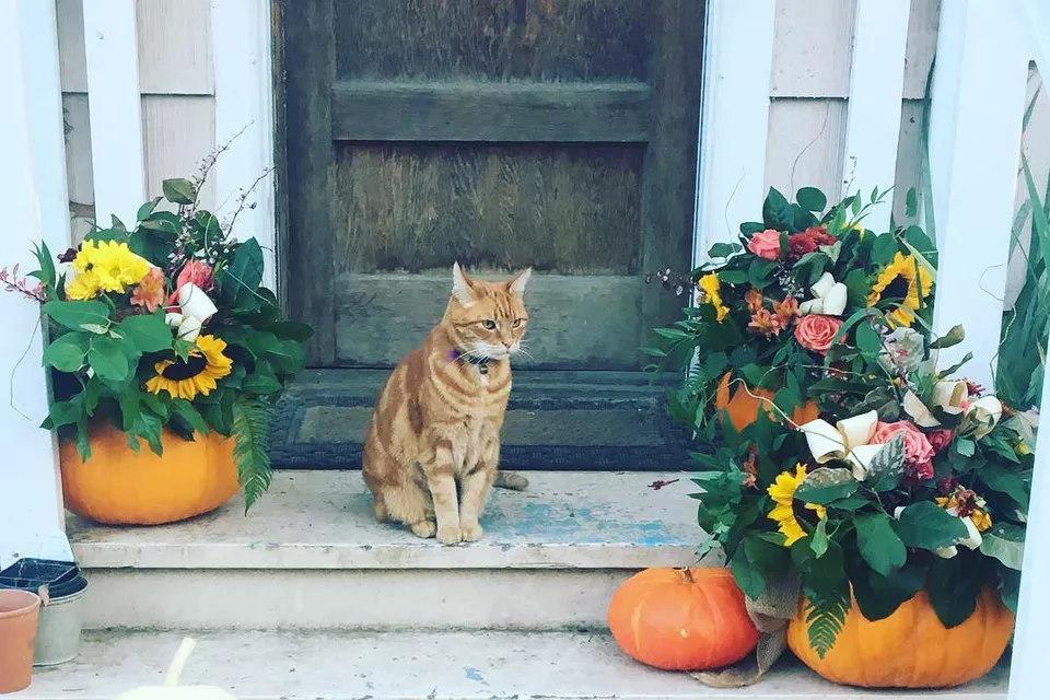 Pumpkins as Vases DIY fall